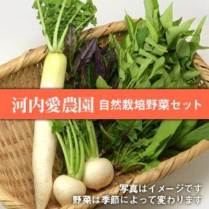 河内愛農園の自然栽培野菜セット【5品】11/27(火) 発送分