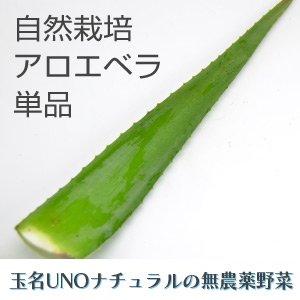 玉名UNOナチュラル 自然栽培 アロエベラ(一本約300g)10/25(金)発送分
