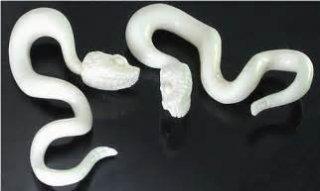 ナチュラルボーン製  白蛇 ボディピアス