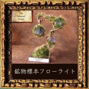 鉱物植物標本 八面体フローライトの植物標本2 (The Mineral Forest)