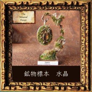 鉱物植物標本 パキスタン水晶の植物標本 (The Mineral Forest)