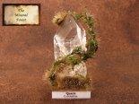 鉱物植物標本 コロンビア水晶植物標本 (The Mineral Forest)