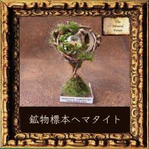 鉱物植物標本 ヘマタイト(シャーマンストーン・モキマーブル)の植物標本5 (The Mineral Forest)