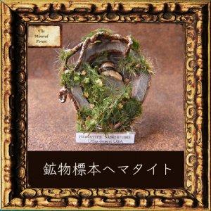 鉱物植物標本 ヘマタイト(シャーマンストーン・モキマーブル)の植物標本7 (The Mineral Forest)