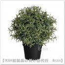 FEJKA:人工観葉植物22 cm(ローズマリー)