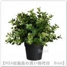 FEJKA:人工観葉植物22 cm(オレガノ)
