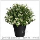 FEJKA:人工観葉植物22 cm(タイム)
