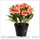 FEJKA:人工観葉植物29 cm(オジギソウ オレンジ)