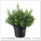 FEJKA:人工観葉植物20 cm(ベビーティアーズ)