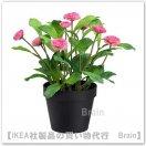 FEJKA:人工観葉植物25 cm(Common daisy ピンク)