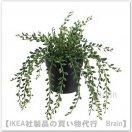 FEJKA:人工観葉植物20 cm(グリーンネックレス)