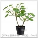 FEJKA:人工観葉植物40 cm(ピレア)