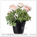 FEJKA:人工観葉植物25 cm(ラナンキュラス ピンク)