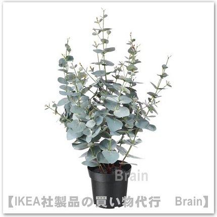 FEJKA:人工観葉植物65 cm(ユーカリ)
