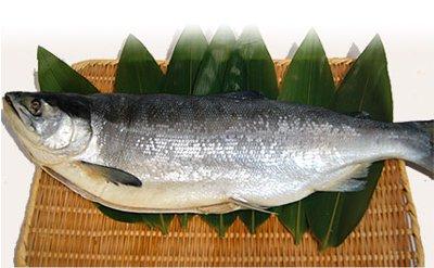 紅鮭(一本)