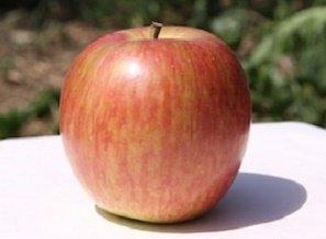 りんご・特別栽培・サンつがる・(長野・飯綱)【家庭用】16-20個・5kg