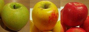 りんご・特別栽培・りんご3種ミックスセ...