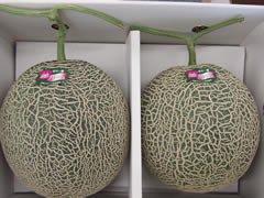 メロン・肥後グリーン(熊本・熊本市)【ギフト用】2玉・約3kg