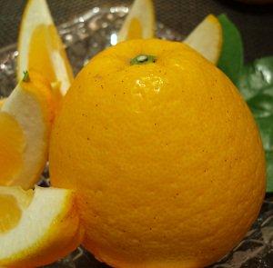 カンキツ・ジューシーオレンジ( 熊本・不知火)【家庭用】中玉・約20入・6kg