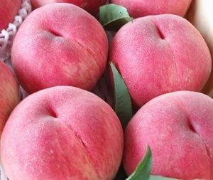 夏の果実・【お得な2カ月まとめ購入・白桃(2種)】(山形・山梨)【家庭用】 X 各月1箱