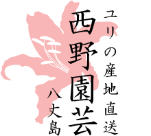 八丈島から産地直送!ユリの西野園芸オンラインショップ【関東近郊送料無料】