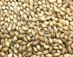 令和3年産「イチバンボシ」六条裸麦(うるち麦)種子 1kg