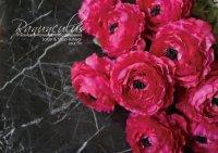 【Ranunculus】ラナンキュラス:フィーシャピンク