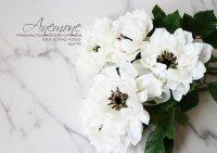 【Anemone】アネモネ:ホワイト