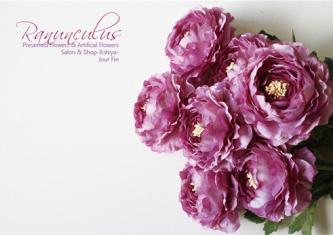 【Ranunculus】ラナンキュラス:ラベンダー