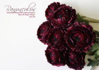 【Ranunculus】ラナンキュラス:ダークパープル<img class='new_mark_img2' src='//img.shop-pro.jp/img/new/icons13.gif' style='border:none;display:inline;margin:0px;padding:0px;width:auto;' />