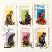 ネコ切手6種セット(古切手)|アフガニスタン 2000年