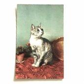 未使用アンティーク・ヴィンテージポストカード|サバトラ猫のポートレート