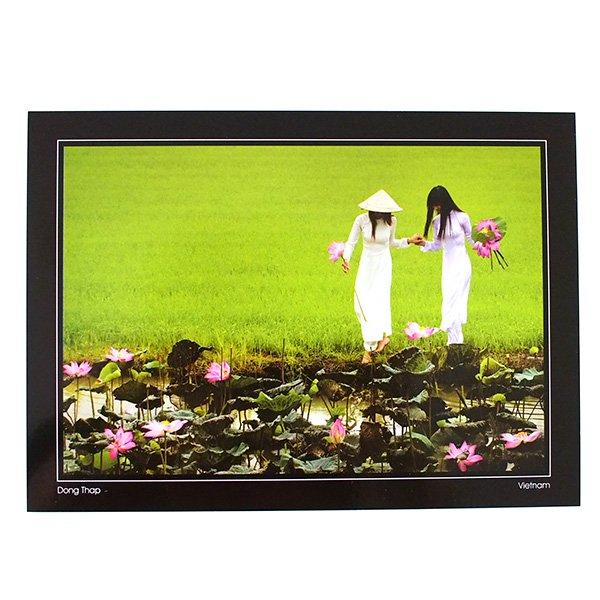 ベトナム ポストカード(蓮を摘むアオザイの女性たち)