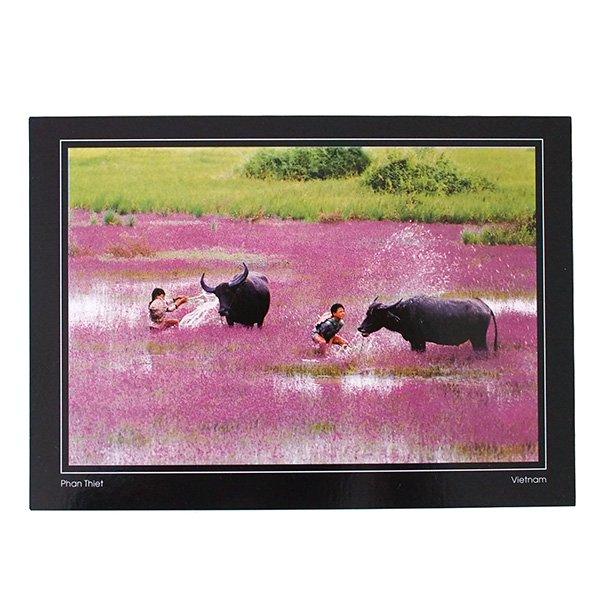 ベトナム ポストカード(水牛と遊ぶ子供たち)