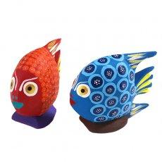 メキシコ アレブリヘス(魚 レッド・ブルー)