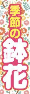 鉢花001