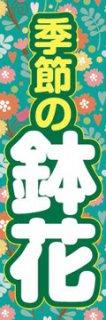 鉢花002