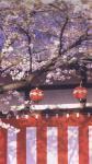 紅白幕 1間×1間 (1800mm×1800mm)