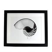 Art Frame Hemi Shell