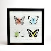 Art Frame butterflies