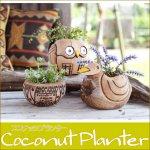 ココナッツプランター フクロウ アヒル アニマル ヤシの実 ココナツ フラワーベース 小物入れの画像
