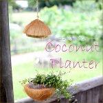 屋根付きココナッツプランター ヤシの実 ココナツ フラワーベース プランター 小物入れの画像