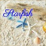 スターフィッシュ ヒトデ 貝殻【同色2個セット】 ヒトデ 貝 ディスプレイの画像
