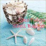 ココトゥイッグシェルバスケット  貝殻 貝 シェル かご カゴ  海 リゾート ハワイアンの画像