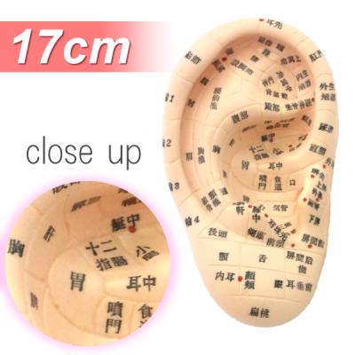 耳模型17cmタイプ~日本語表記~【10個セット】