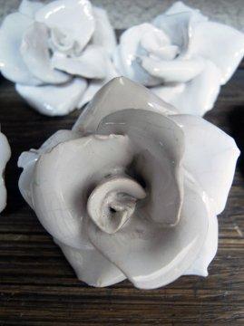antique white rose