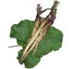 滝野川ごぼう(小袋:35粒)【有機種子・固定種】(大袋サイズも有ります)