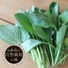 小松菜【自然栽培の種】
