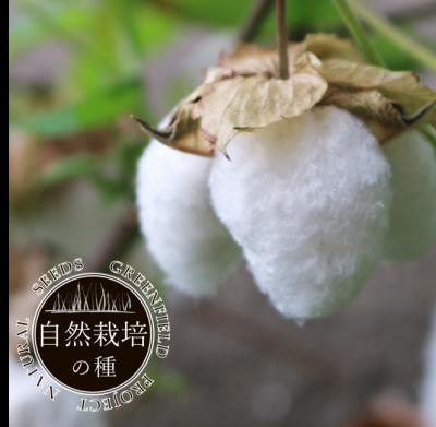 和綿【自然栽培の種】