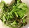 こだわりの栽培セット/サラダミックス
